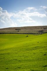 Yeguas y caballos pastando