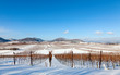 Leinwanddruck Bild - Winter in der Pfalz