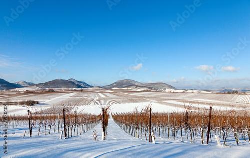 Winter in der Pfalz - 79150408