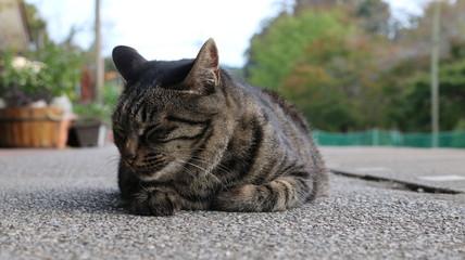 猫お休み中