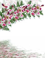 Alstroemeria flower isolated on white background