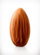 Almond, vector icon - 79154400