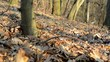 bare forest - sunny - slider move - leaves - closeup