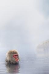 温泉に入る野生猿