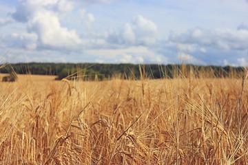 oats texture