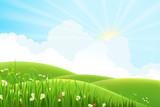 Fototapety Summer sunny meadow landscape, vector illustration