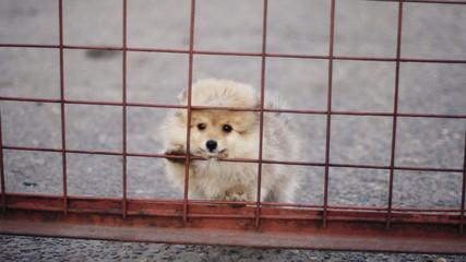 Одинокий щенок
