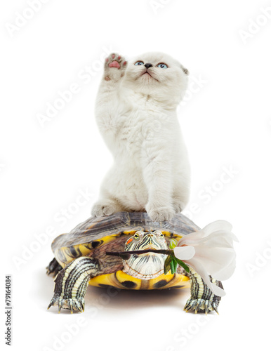 Foto op Canvas Schildpad kitten and turtle