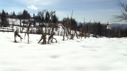 meadow winter