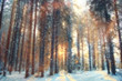 January winter landscape in the forest - 79167826