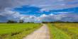 Dutch Road through Pastures