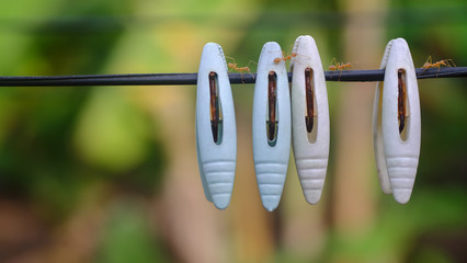 the small ants walking on clothesline
