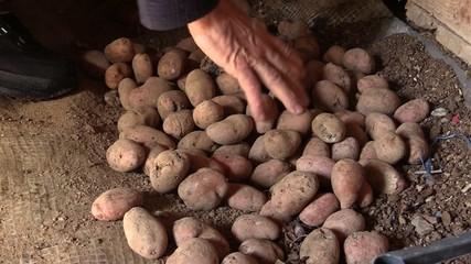 hand potato