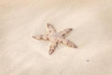 Seastar on the sand of the beach
