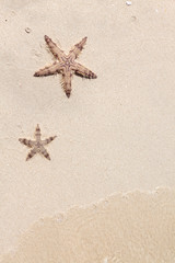 Seastars on the sand of the beach