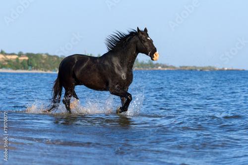 Black horse run in sea Poster