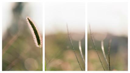 Spiga di primavera