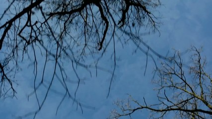 flying through bare forest - shot up to sky - sunny - blue sky