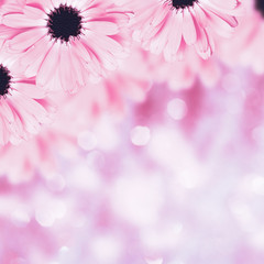 Scenic floral border beautiful blurred background, flowers