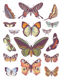 large collection of vector butterflies