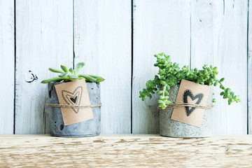 Two succulents in concrete pot. Gift tag with hand drawn hearts.
