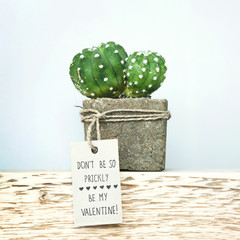 Happy Valentine's Day. Succulent in concrete pot with tag