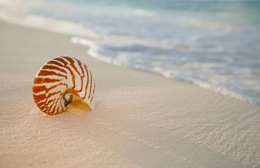 nautilus sea shell on golden sand beach in  soft sunset light