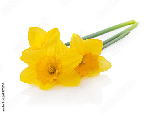 Plexiglas Narcis Yellow daffodils isolated on white background. Easter card with