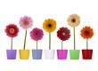 Blumentöpfe mit Gerbera