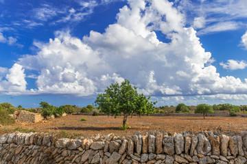 XXX - mallorquinische Landschaft mit Cumuluswolken -