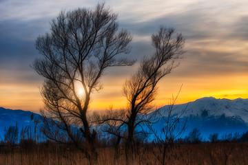 Sunset between trees in the background snowy mountains