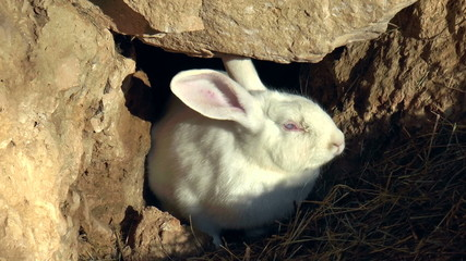 The video shows Mammals-family of lagomorphs