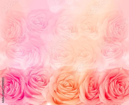 Flower rose background
