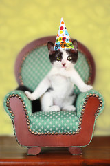 Kitten Sitting on a Chair