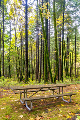 Autumn forest in Oregon with a table