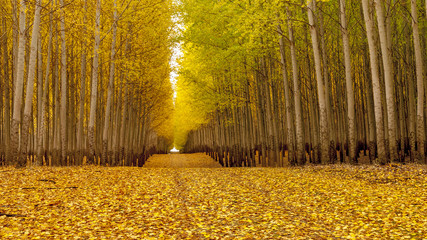 Country road leads through an autumn forest