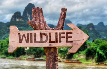 Wildlife wooden sign with forest background