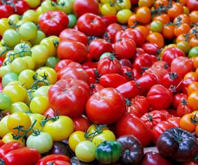 Tomato assortment