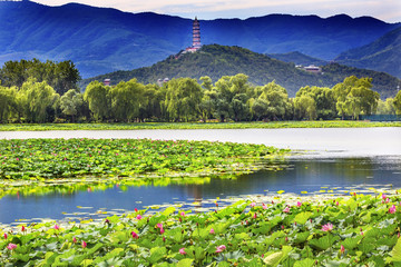 Lotus Garden Reflection Summer Palace Beijing China