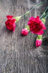 fresh pink carnations  on wooden background.