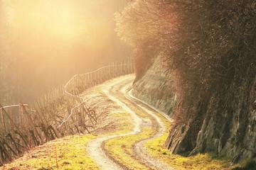Langer Weg in den Weinbergen