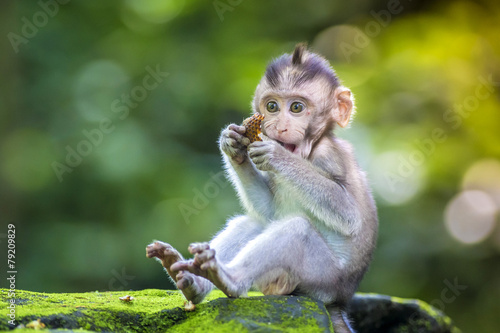 Foto op Canvas Aap Little baby-monkey