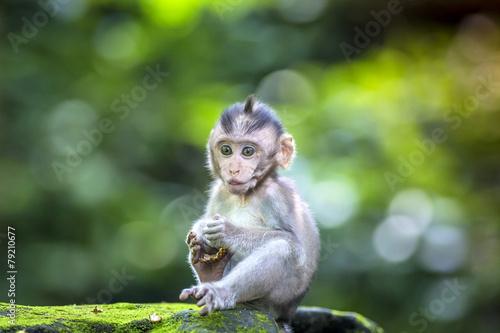 Foto op Canvas Aap Little baby-monkey