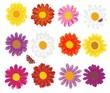 Sammlung mit bunten Blüten