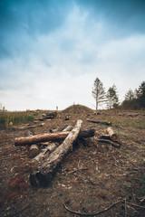 old sawed logs