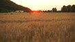 Flying over cornfield during sunset