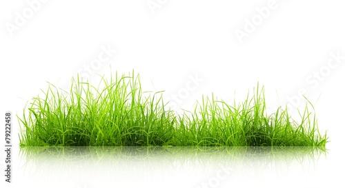Deurstickers Gras flora