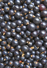 Blackcurrants.