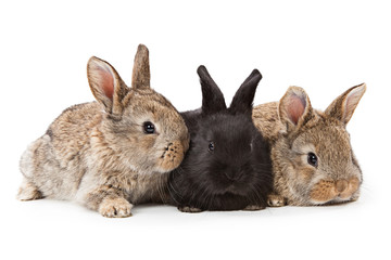 Cute bunnies isolated on white background