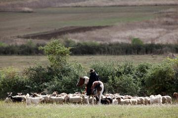pastore e pecore